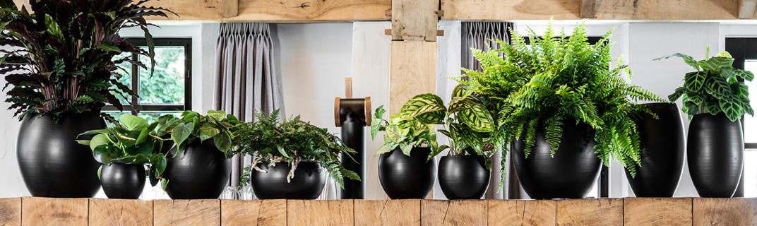 Indoor potten